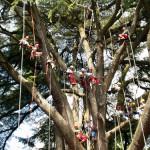 Treeclimbing_team_bg