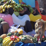 A monkey eats fruit in front of an ancie