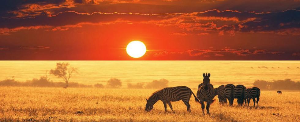 african-safari-wallpapers-1920x1080